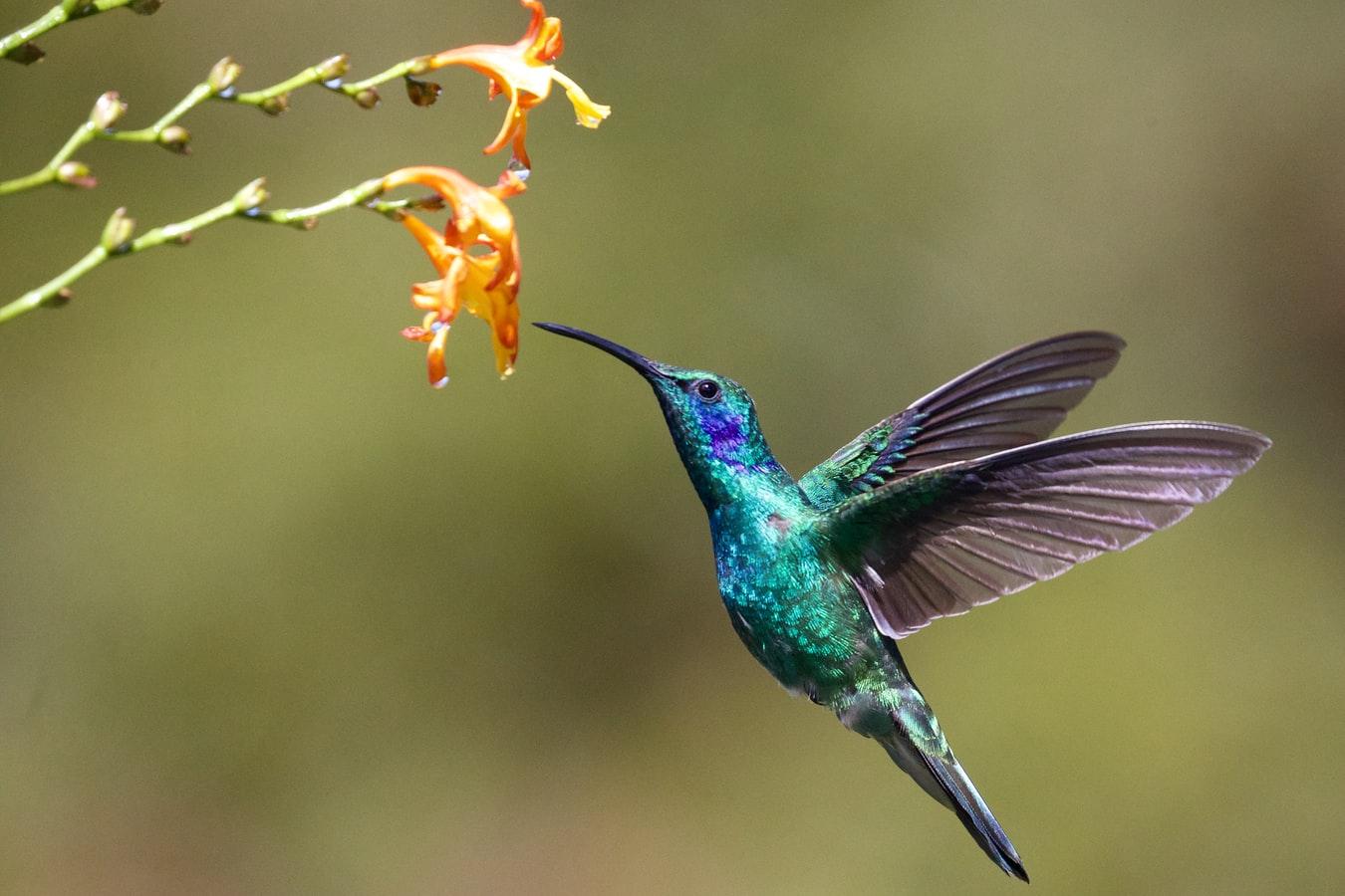 Hummingbird Meditation by Alexandra Alves